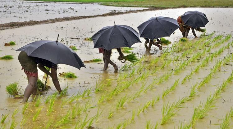 FAO agricultura